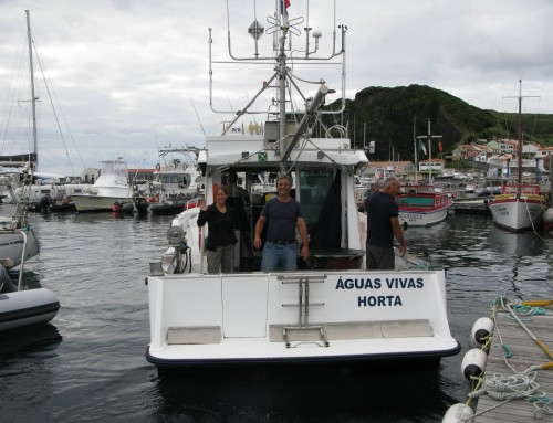 Members of the IDL in a campaign off Faial Island