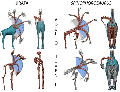 Ontogenetic Similarities Betweem Giraffe and Sauropod Neck Mobility