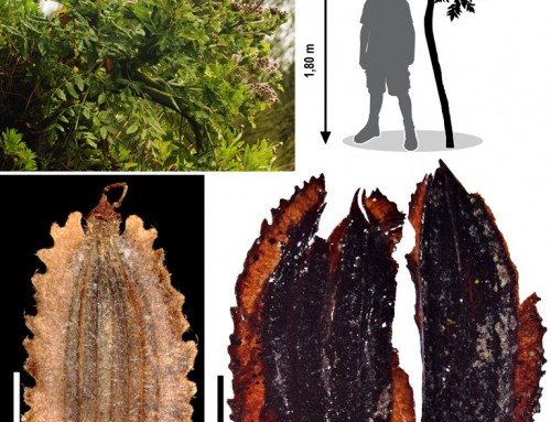 The oldest fossil of a carrot was discovered on the island of Madeira